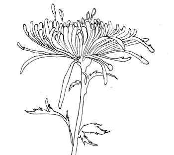 Line drawing - one petal at a time