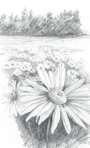 1 daisies distance