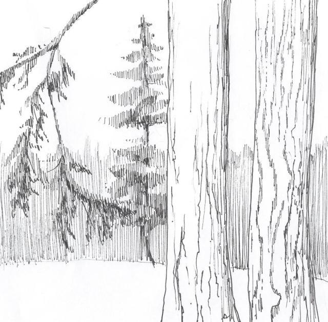 diminishsize-trees