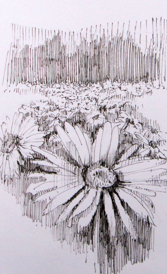 field of daisies ink