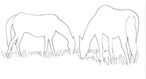 horses-negpos