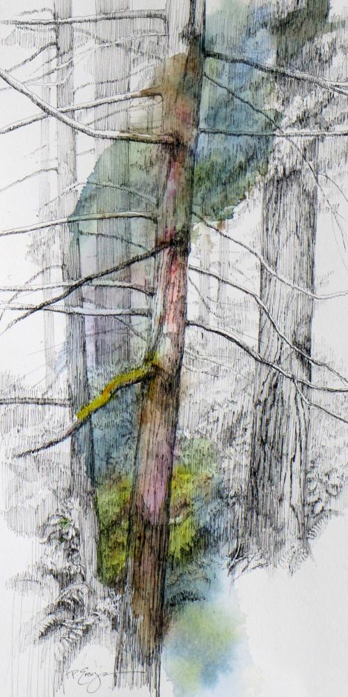 bloedel woods