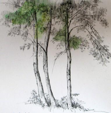 55-trees