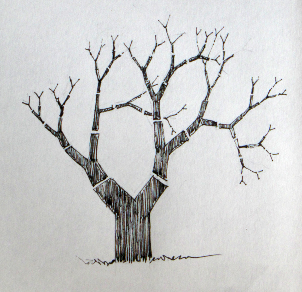 drawing a tree love to draw