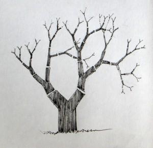 55-y tree