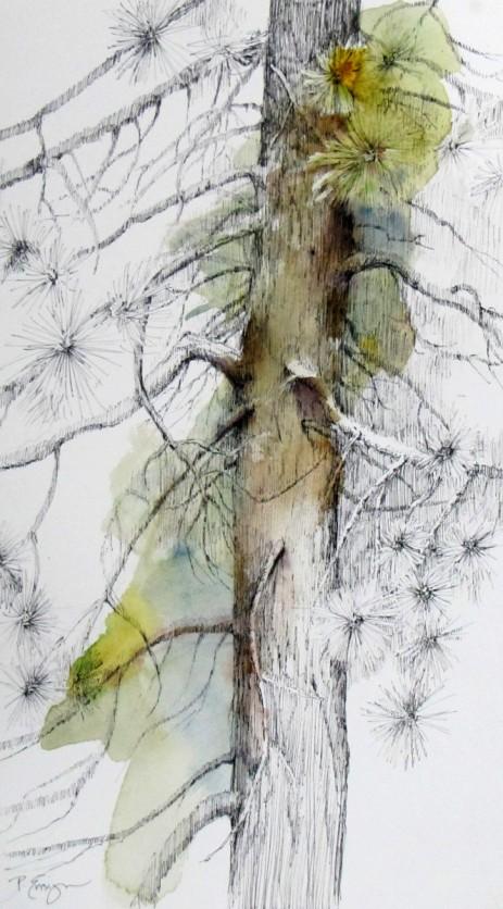 pine-